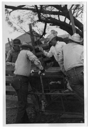 Primary view of object titled '[Cowboys with a Restrained Calf]'.