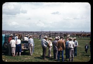 Primary view of object titled '[People in a Field near Fenced Cattle]'.