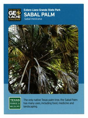 Primary view of object titled '[Trading Card: Sabal Palm]'.