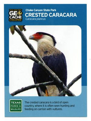 Primary view of object titled '[Trading Card: Crested Caracara]'.