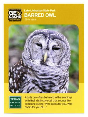 Primary view of object titled '[Trading Card: Barred Owls]'.