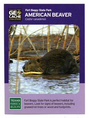 Primary view of object titled '[Trading Card: American Beaver]'.