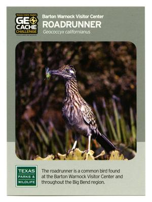 Primary view of object titled '[Trading Card: Roadrunner]'.