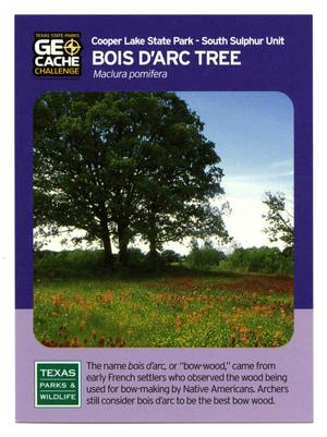 Primary view of object titled '[Trading Card: Bois d'Arc Tree]'.
