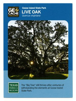 Primary view of object titled '[Trading Card: Live Oak]'.