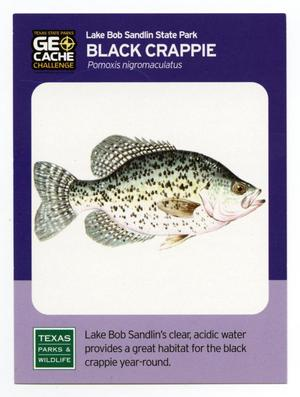 Primary view of object titled '[Trading Card: Black Crappie]'.