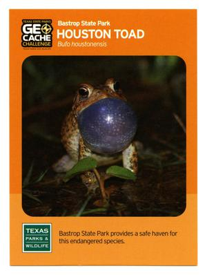Primary view of object titled '[Trading Card: Houston Toad]'.