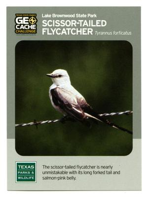 Primary view of object titled '[Trading Card: Scissor-Tailed Flycatcher]'.