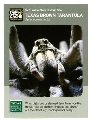 Primary view of object titled '[Trading Card: Texas Brown Tarantula]'.