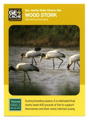 Primary view of object titled '[Trading Card: Wood Stork]'.