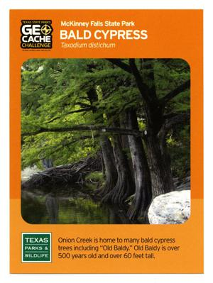 Primary view of object titled '[Trading Card: Bald Cypress]'.