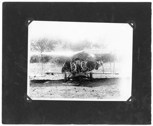 Primary view of object titled '[Plane Wreckage in Mckinney, Texas]'.