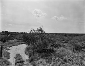 Primary view of object titled '[Dolores Viejo (Old Dolores), (View East)]'.