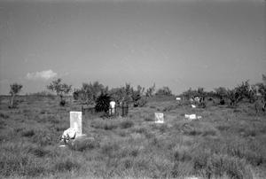 Primary view of object titled '[Indianola Cemetery]'.