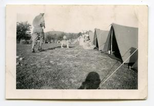 Primary view of object titled '[Photograph of a Dog at a Military Camp]'.