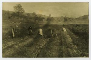 Primary view of object titled '[Six Women Working in a Field]'.