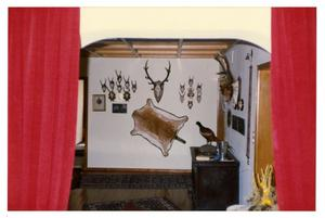 Primary view of object titled '[Hunting Trophies Mounted on Wall]'.