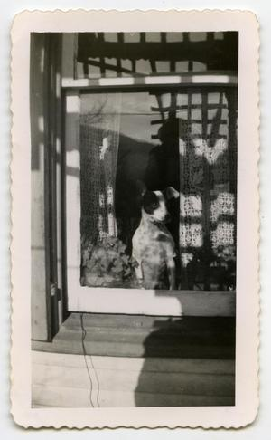 Primary view of object titled '[Photograph of a Dog in a Window]'.