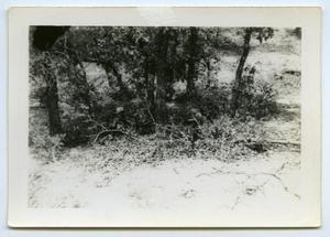 Primary view of object titled '[Photograph of Soldiers in Camouflage]'.