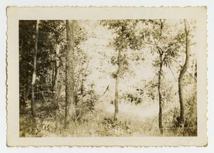 Primary view of object titled '[A Photograph of a Dense Forest]'.