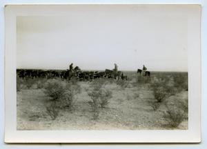 Primary view of object titled '[Photograph of a Texas Cattle Drive]'.