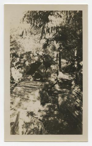 Primary view of object titled '[Photograph of Petrified Trees Near Santa Rosa, California]'.