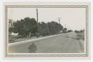 "Primary view of object titled '[Photograph of ""Hangar Avenue"" at Kelly Field]'."