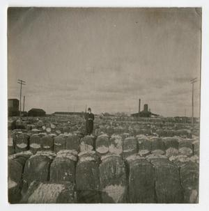 Primary view of [Cotton Compress at Abilene, Texas]