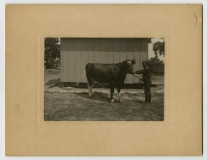 Primary view of object titled '[Photograph of Henry Clay, Jr. with a Cow]'.