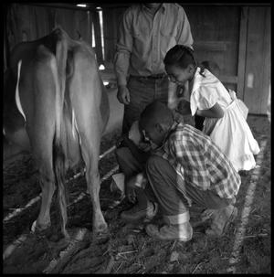 [Children Looking at a Cow]
