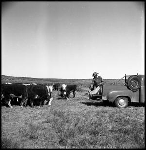 Primary view of object titled '[Cowboy Dumping Cattle Feed off of  a Truck]'.