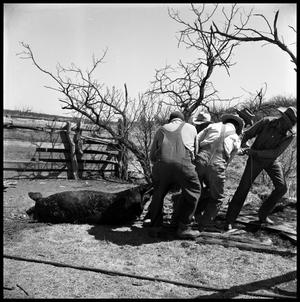 Primary view of object titled '[Men Dragging a Dead Hog]'.