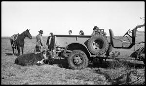 Primary view of object titled '[Ranchers with a Jeep and Animals]'.