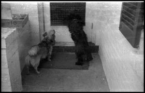 Primary view of object titled '[Dogs Looking out Door]'.
