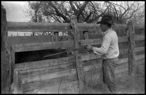 Primary view of object titled '[Rancher Poking a Cow with a Cane]'.