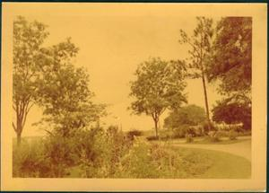 Primary view of object titled '[The driveway leading to the George Ranch house]'.