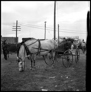 [Young Man in a Horse Drawn Wagon]