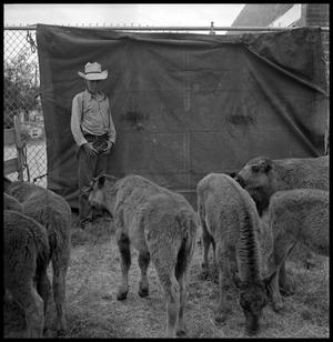 Primary view of object titled '[Boy in a Sheep Pen]'.