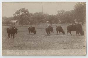 Primary view of object titled '[Postcard of Buffalo at Brackenridge Park]'.