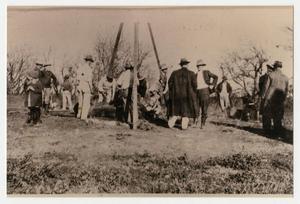 [Photograph of a Buffalo Killing]