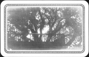 Primary view of object titled '[Photograph of the tree house in the Nancy Jones Oak tree]'.