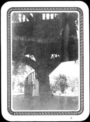 Primary view of object titled '[Photograph of a woman standing in front of the Nancy Stiles Jones oak tree]'.