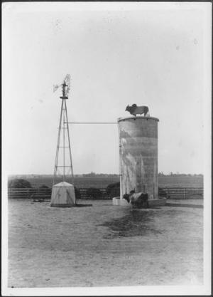 Primary view of object titled '[Photograph of a Brahman bull standing near a water trough/tower]'.