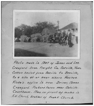Primary view of object titled 'Cotton Hauled by Mules in Oakville'.