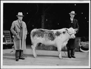 Primary view of object titled '[Albert Peyton George standing next to a man holding the halter of a steer]'.