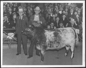 Primary view of object titled '[Albert Peyton George with the reserve grand champion steer]'.