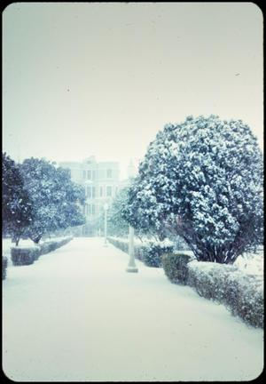 Primary view of [South Entrance of TLC in Snow]