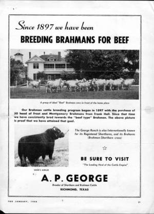 Primary view of object titled '[Advertisement for A.P. George's Brahmans]'.