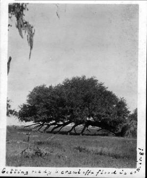 Primary view of object titled '[Large tree that has been uprooted and is laying on its side]'.