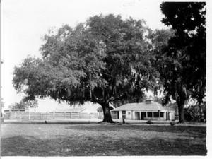 Primary view of object titled '[A large tree in the George house backyard]'.